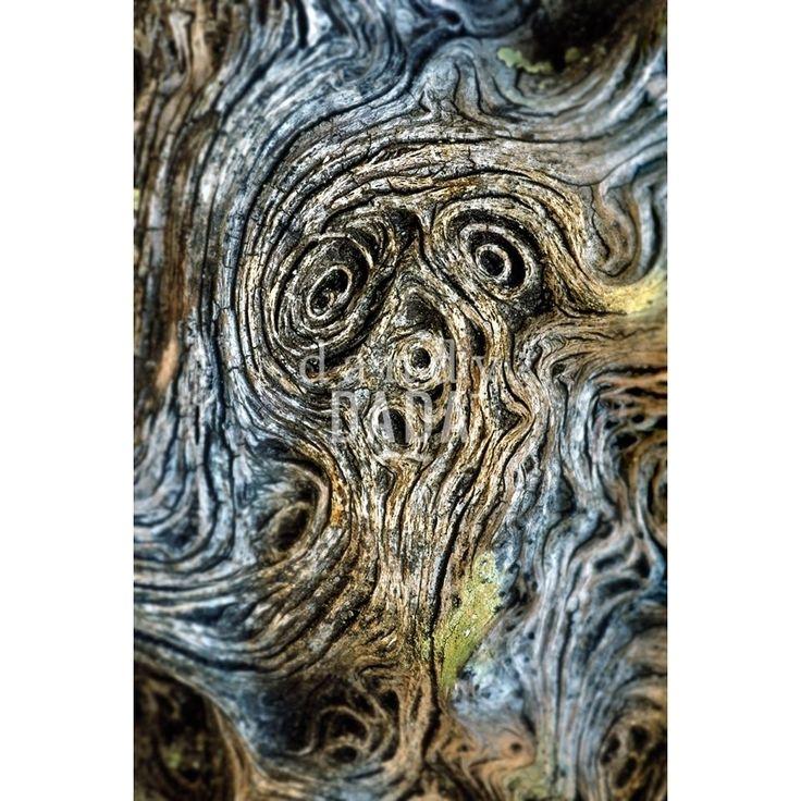 """In """"L'urlo di San Rossore"""" l'autore richiama """"l'Urlo"""" di E. #Munch. Non vi sono pennellate, ma una #corteccia le cui rughe creano un #volto, che devia leggermente a sinistra. Lo spazio sembra storcersi sotto i nostri occhi. L'ambiente rappresenta l'unione delle sensazioni dei differenti organismi viventi. Opera fondamentale nella vita dall'Autore in quanto è stata proprio questa #fotografia a ispirargli tutta la ricerca """"Fotocreature Dig-Out""""."""