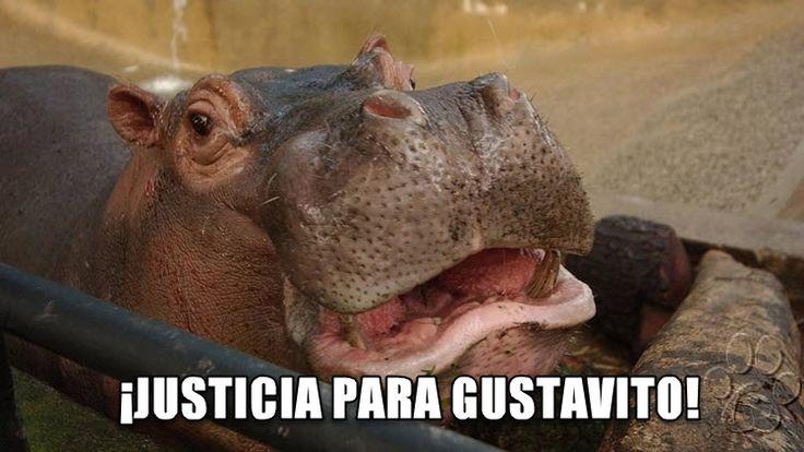 """Un hipopótamo muy querido llamado Gustavito ha muerto tras varios días de agonía luego de un ataque """"cobarde e inhumano"""" en el Zoológico Nacional de El Salvador."""