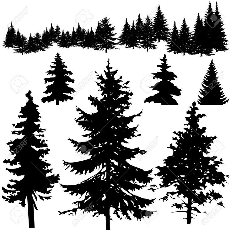 Pine Tree Silhouette Free Buy and download royalty-free image ID Detailed vectoral pine tree silhouettes. by pinare from Crestock Stock Photos