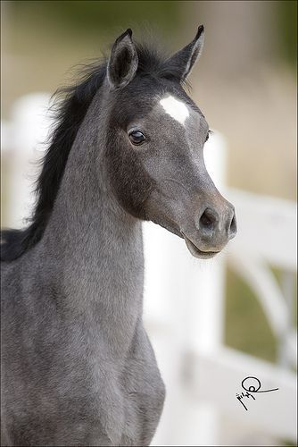 Beautiful colour on this foal