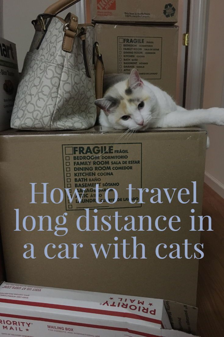 How To Travel Long Distance In A Car With Cats Cat Travel Cats Cat Training