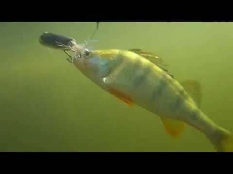 Добро пожаловать на канал, посвящённый ловле хищной рыбы на спиннинг. Этот канал создан для тех, кто увлечён спиннинговой ловлей. В своих видео мы покажем ло...