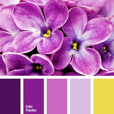 Purple, hot pink, sunny yellow - absolutely magical combination #2268 (cp)