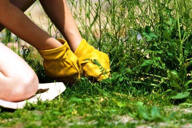 Гулять каждое утро по красивому газону — нереальное удовольствие. Но для того, чтобы зеленая травка выглядела привлекательно, нужно немало потрудиться, ведь следует искоренить ее главного врага — сор…