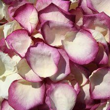 Click to Order Regal Rose Petals