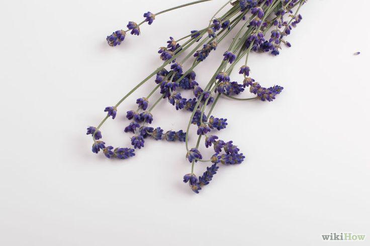 Image intitulée Make Lavender Oil Step 2