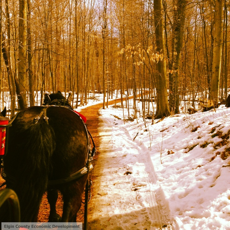 Springwater Maple Syrup Festival, Aylmer Ontario, Elgin County. Wagon rides through Springwater Forest.