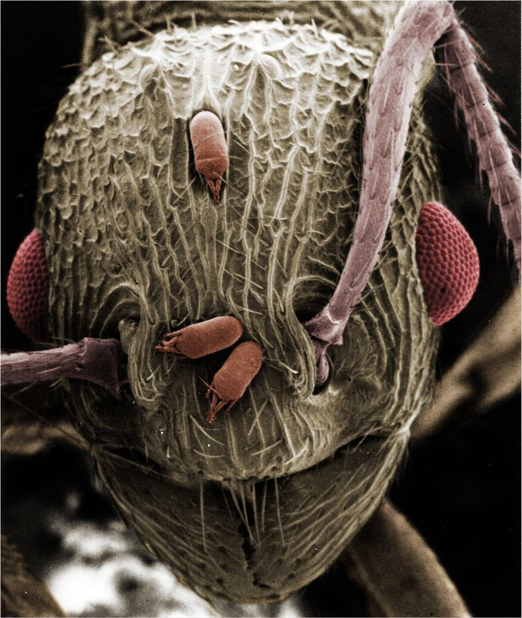 Electron Microscopy Lab - School of Biology and Ecology ...