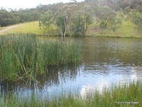 SHADY GUMS 100 acres Private Lagoon