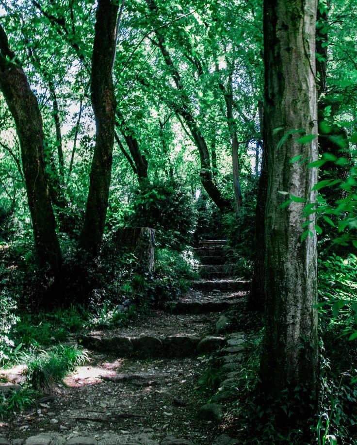 nel bosco - null