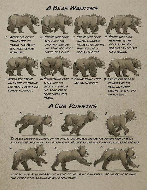 "anatoref: "" Bear by Aaron Blaise """