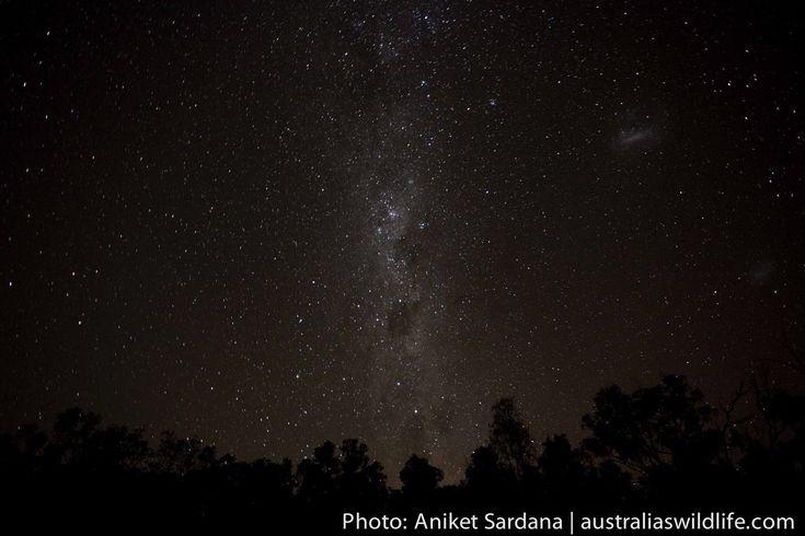 The #Night #Sky #NSW #Australia #aus_wildlife