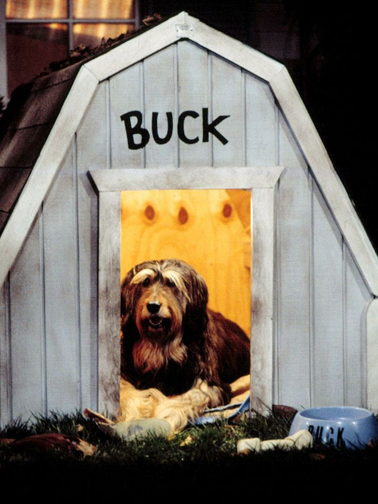 Buck - Married... with Children