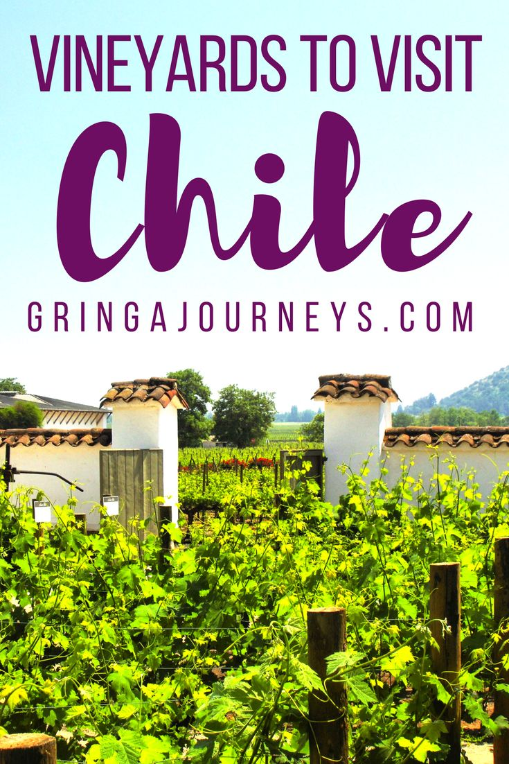There are so many different vineyards to see around Santiago and often so little time! Here are the four best vineyards to tour on your trip to Chile.