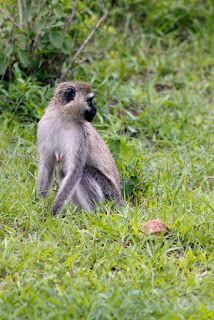 Why not?: Lake Mburo National Park, a little big park (part2...