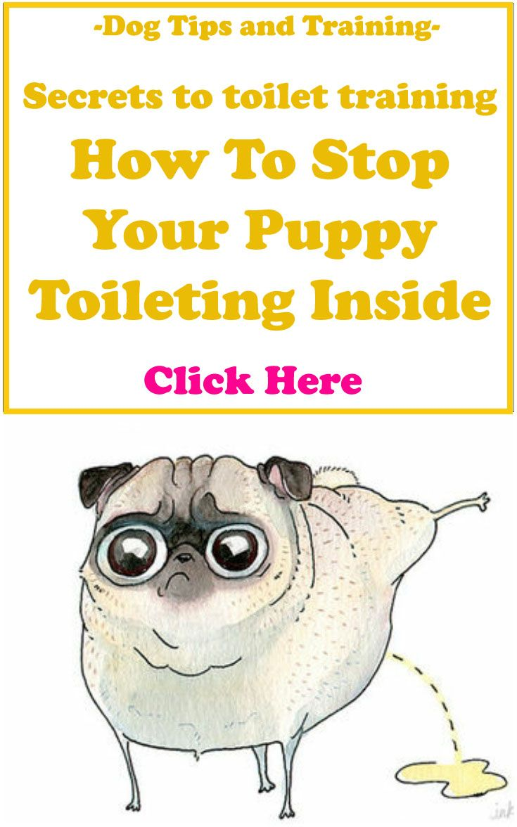 Dog Tips And Training Secrets To Toilet Training How To Stop