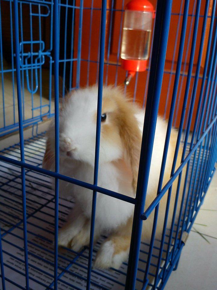 Shipoo,,, my Rabbit