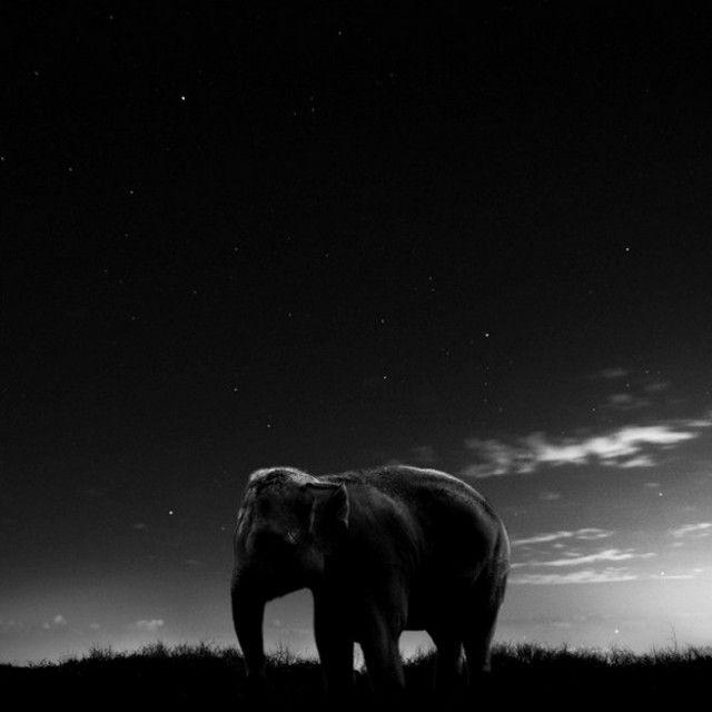Animal Series - by Noah Vanderveer #foto #fotografia #fotografo #animal #animais #photo #photography #photographer #animals #noah #vanderveer