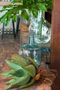 The Company Gardens Restaurant Cape Town   bthings.me   aloe, succulent, plant, glass, still life, decor #Binside #Boutside, natural, elements