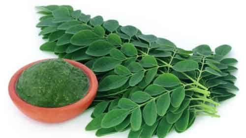 moringa-planta-milagrosa-beneficios