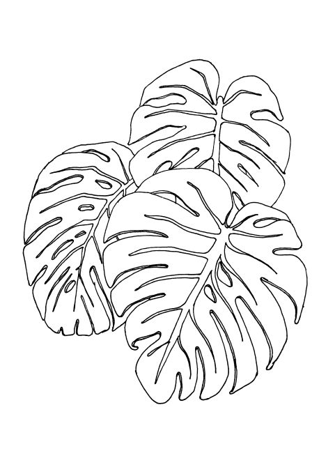 Line Drawing Plants : Doodle drawing illustration ink zentangle jungle leaves