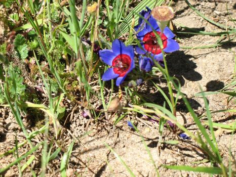Wild flower viewing makes a great Spring getaway on the West Coast, Western Cape, South Africa