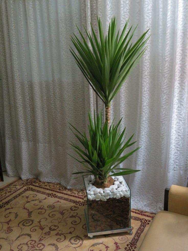 Yucca Separar Sala De Estar Da Sala De Jantar Uma Op O