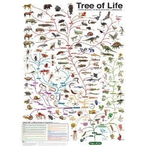 Evolution: Charles Darwin was wrong about the tree of life