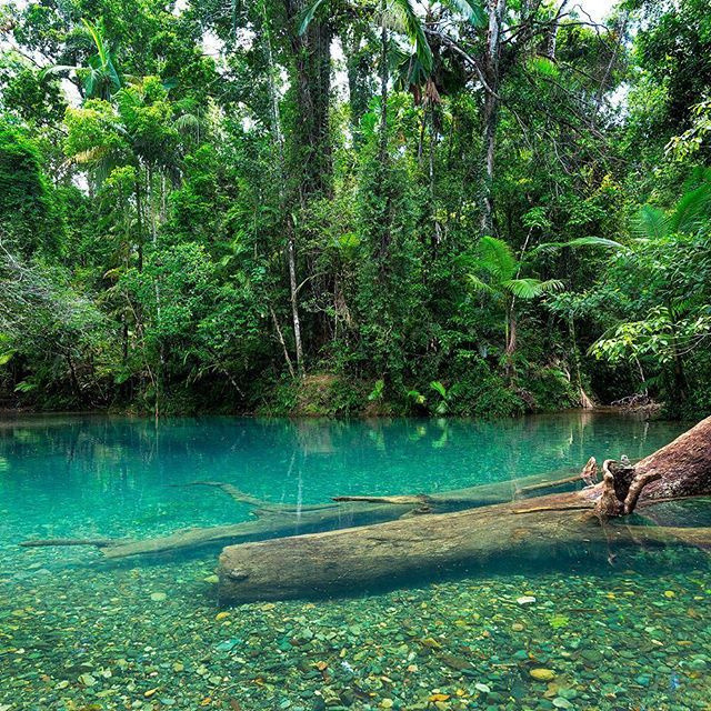 daintree rainforest queensland