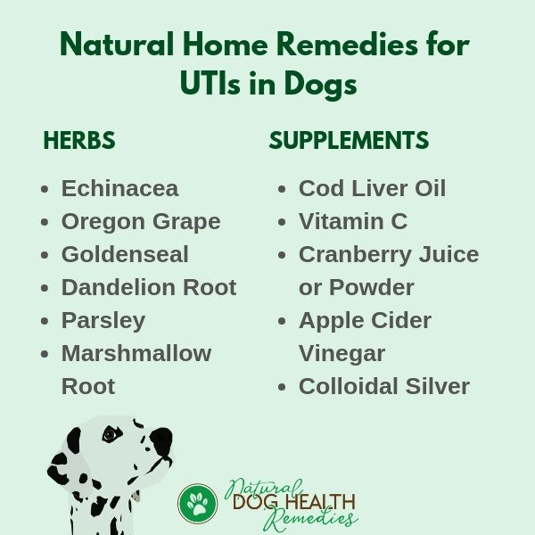 Dog Urinary Tract Infections Symptoms Treatment Natural Home