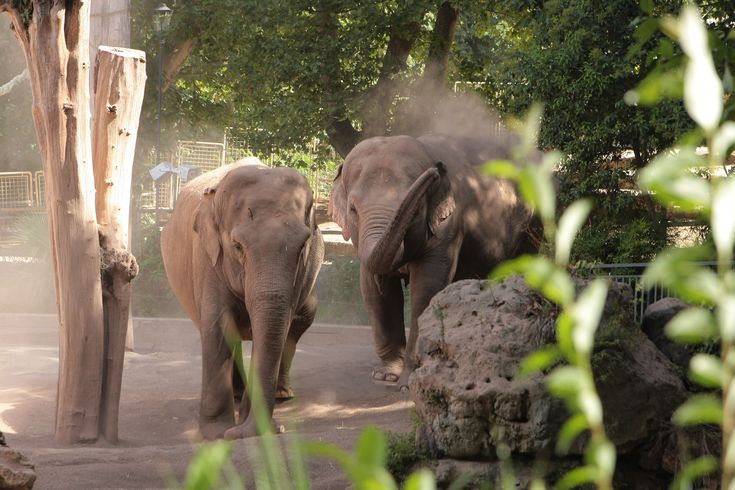 What to see in Rome? the elephants @bioparco!