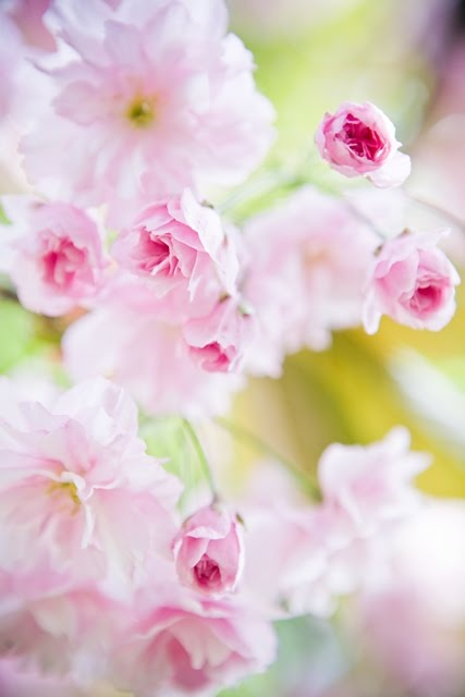 So pink & so pretty ~ # flowers