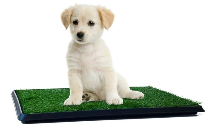 Puppy Potty Trainer, The Indoor Restroom for Pets | Groupon