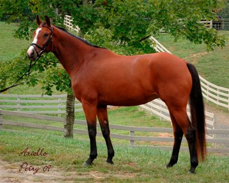 bay horse coloring pages - photo#38