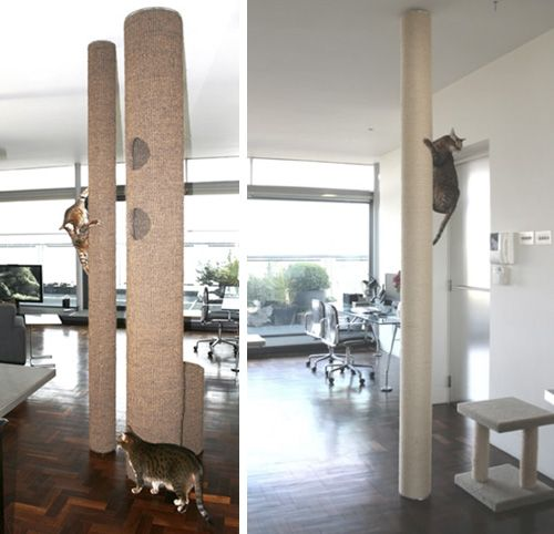 Hicat Climbing System: A Cat Tree Like No Other. Brilliant, space saving idea, and fun for the kittys indoors on rainy days!