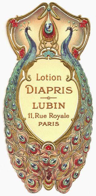 PEACOCK'S GARDEN: Lotion Diapris