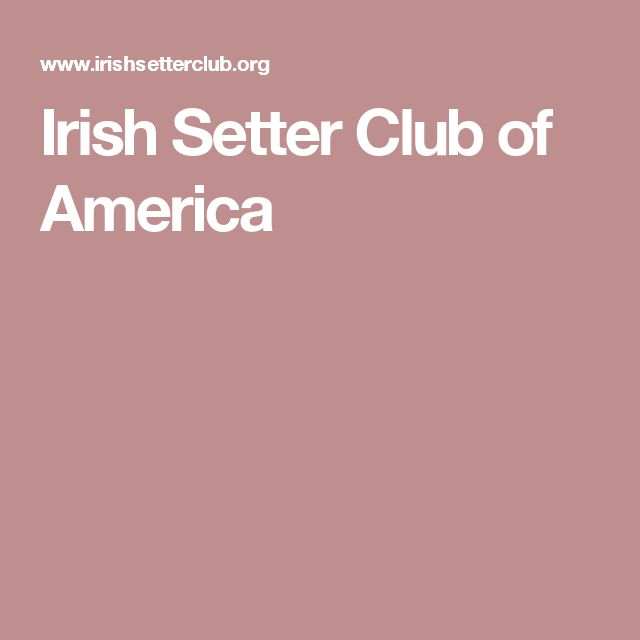 Irish Setter Club of America