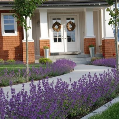 Front walkway plant ideas lavender green thumb for Plants for landscaping around house