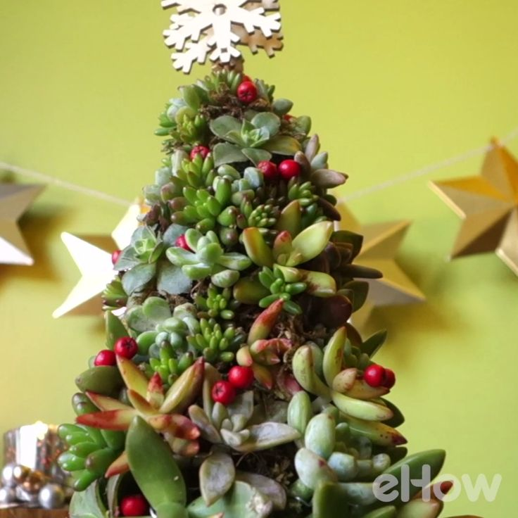 Make a festive tabletop tree made from succulents to brighten your holidays for years to come!