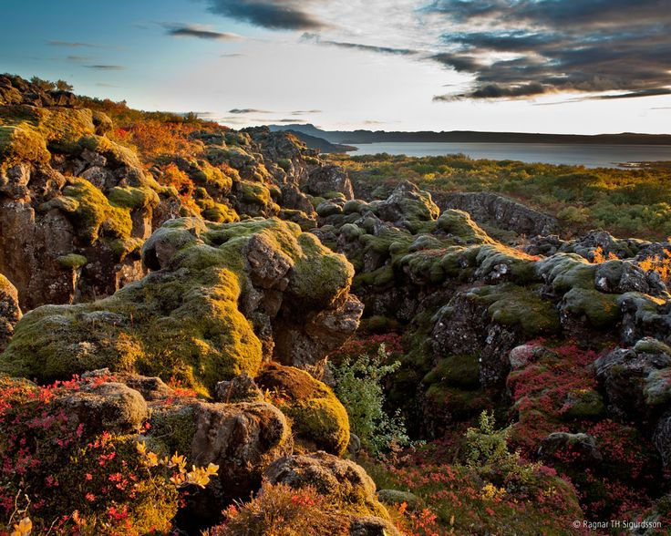 Thingvellir National Park in Iceland is famous for being the site of the Althing, Iceland's first parliament, one of the few places you can see the Mid Atlantic Ridge on land, and its vast lake - which is great for both divers and birdwatchers #Iceland #Thingvellir