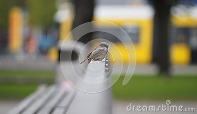 Bird, sparrow on the bench