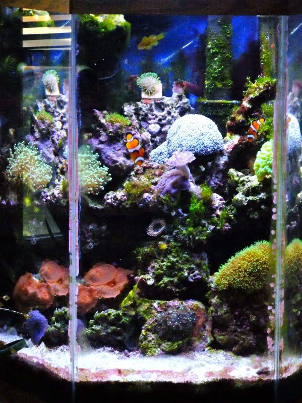 25 best ideas about hexagon fish tank on pinterest fish for 35 gallon fish tank