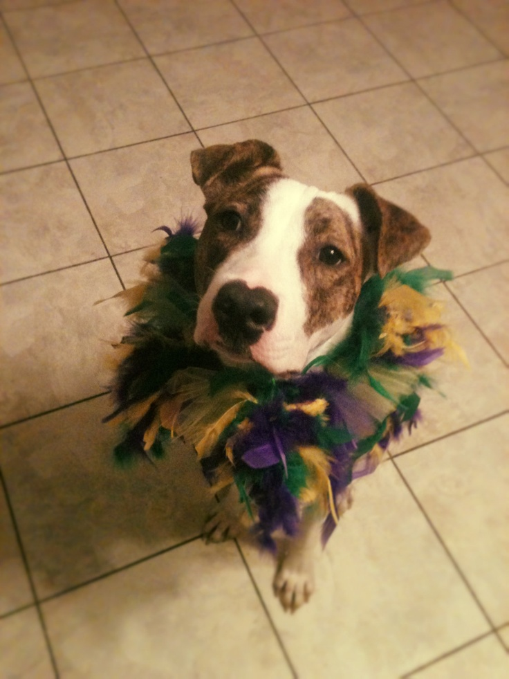 Mardi gras Costume Collar- if only roscoe would wear this