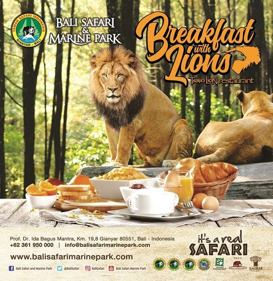 Breakfast with Lions at Bali Safari & Marine Park #BreakfastwithLions #BaliSafari #MarinePark #BaliPlusMagazine #BaliPlusInYourHand #BaliPlus #BaliMagazine #Magazine #Bali