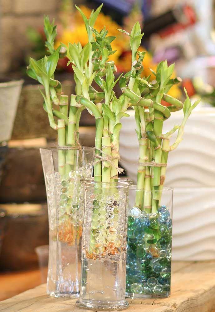94783cb71 Outra opção para o vaso de bambu da sorte são as bolinhas de gel ao invés