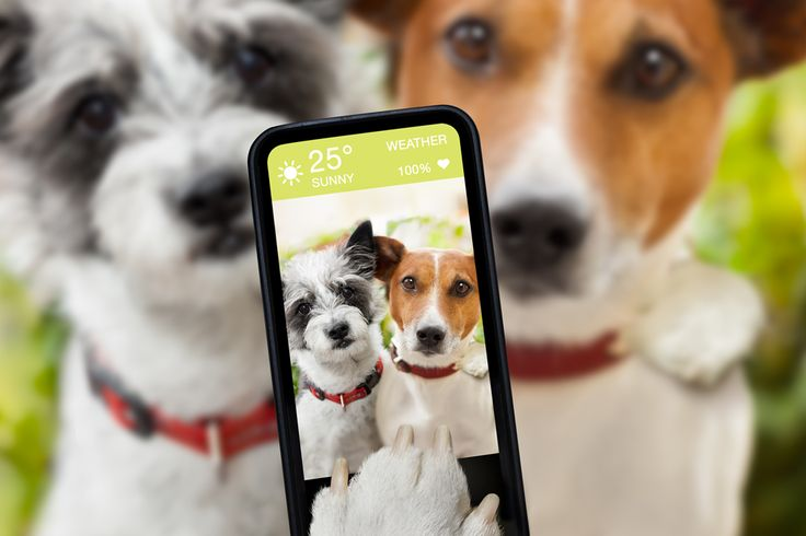 Tips for taking the perfect photo of your pet in 2017. Lulu & Robbie Blog