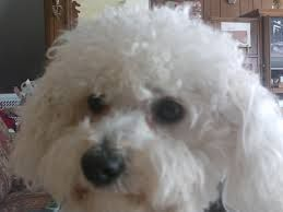 Cute Puppy in Village Vet Animal Clinic,Broken Arrow,OK
