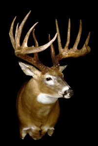 King buck photos...wisconsin buck controversy. Will it be deemed the world record?