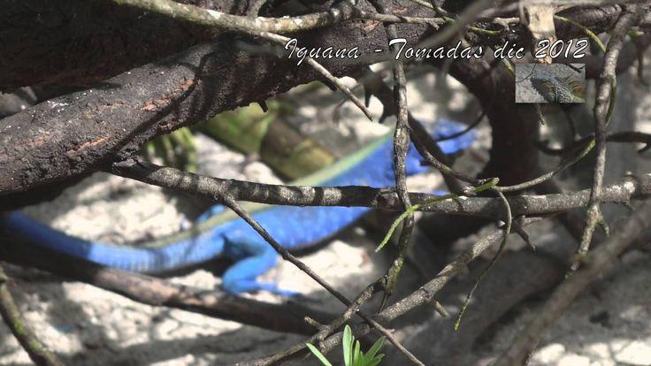Isla de San Andres y Johnny Cay Iguanas - Turismo por Colombia