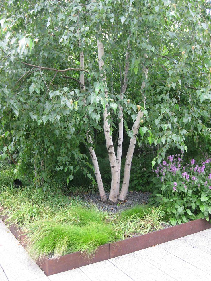 61 best arbres c u00e9p u00e9e multi troncs images on pinterest